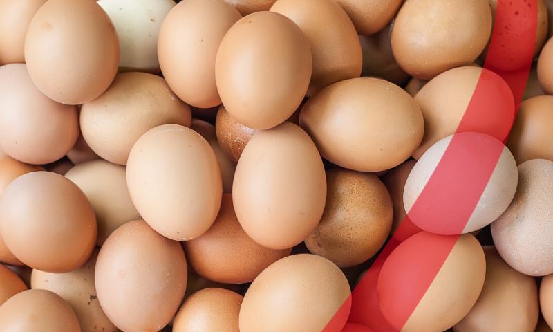 eggshell qualità tecnozoo