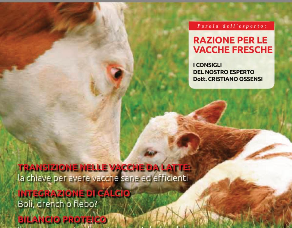 Vacche fresche